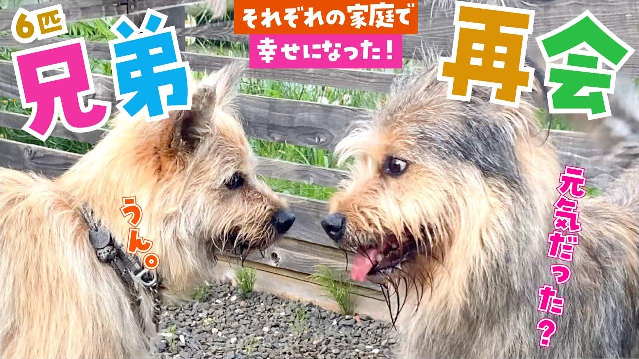 保護犬の姉妹が感動の再会!野犬時代、一緒に暮らした絆が見えました