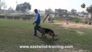 Eastwind Training /dog Name/figo