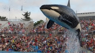 Shamu Show at Sea World San Diego July 2013 HD