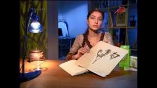 видео Багульник - Лечебные свойства Багульника - Применение Багульника в