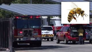 Dozens of Students Stung By Swarm of Bees During Lunch