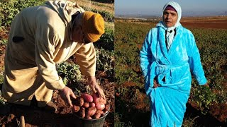 زوج لالة حادة يعطيكم فكرة عن زراعة البطاطس بأنواعها المختلفة