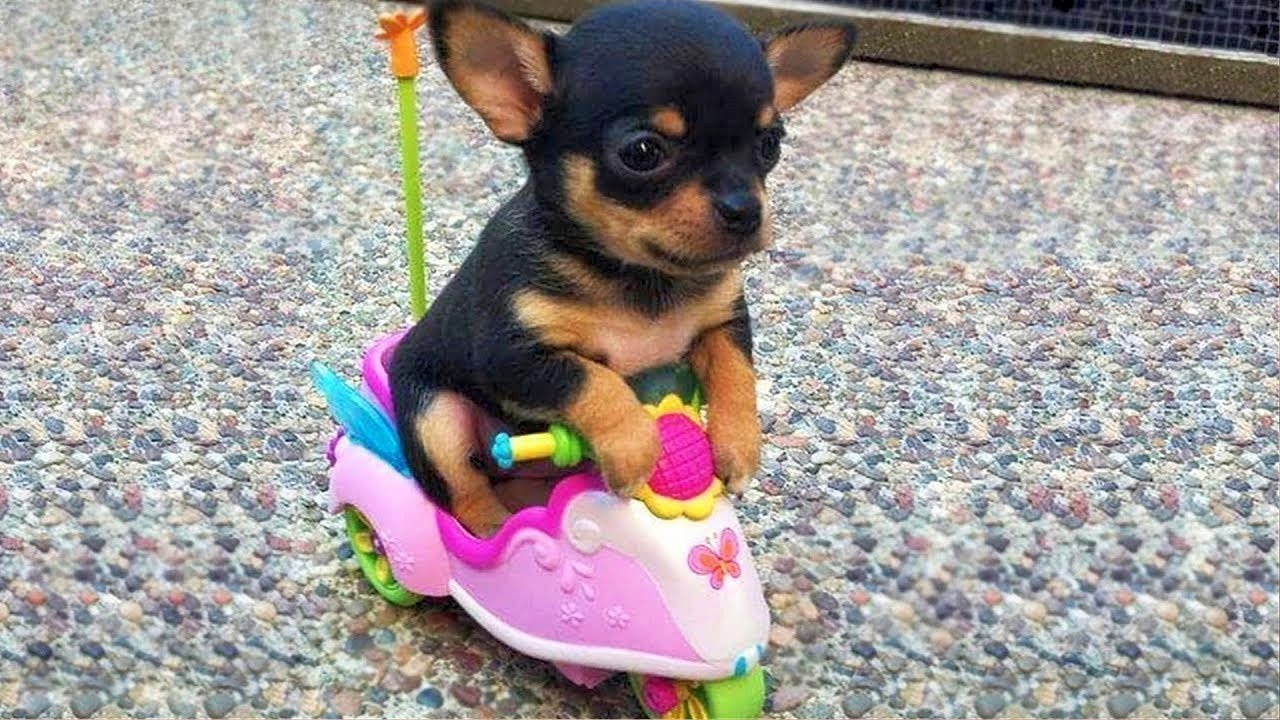 Super Cute Baby Animals