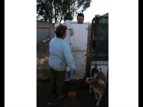 Protectora de animales de malaga por lorena alba youtube for Protectora de animales malaga ciudad jardin