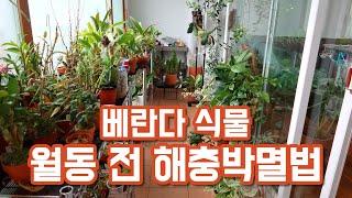 베란다 식물 해충 박멸하는법!! 친환경 살충제 추천합니…