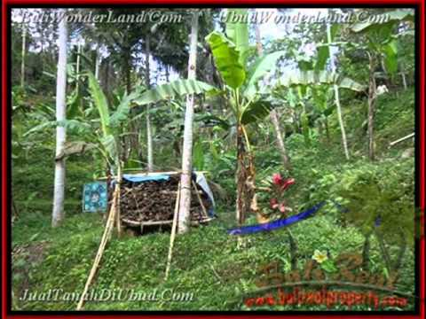 Land for sale in Bali, stunning Rice fields and river view in Ubud