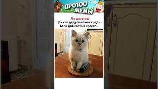 Приколы и Мемы с Озвучкой  Свежие МЕМЧИКИ про Собак и Котов