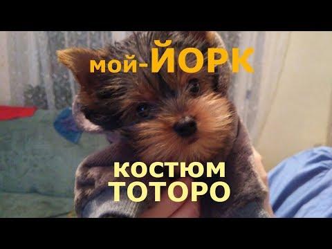 костюм для собаки - ТОТОРО аниме картинки фото