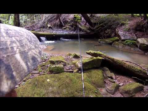 Beautiful Allegany Trout Fishing! ft. Steve from SCB