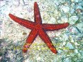 Alcatrazes, Mergulho, Dive, Ilhas, Islands, Aventura, Adventure, Biologia, Marinha, Marine, Biology