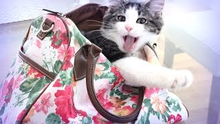 Мой котенок - ангелочек Джесси ♥  LifeinsideUSA