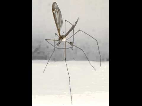 Mosquito Facts - Facts About Mosquitoes