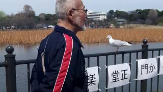WA-Side ジュリアナの祟り Jewel*Mariee ユイガドクソン BANZAI JAPAN ...