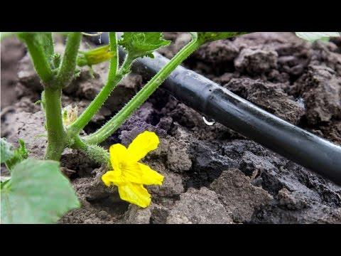 Curso Irrigação em Frutíferas - Outros Sistemas de Irrigação