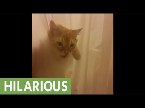 Cat rips through shower curtain for bath time