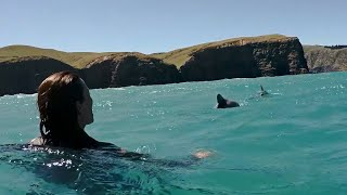Swimming with Dolphins - Akaroa