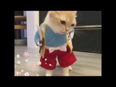 Cat Funny Clip Whatsapp Status Videos 2018