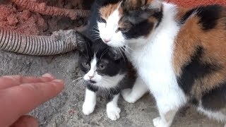New kitten with mom