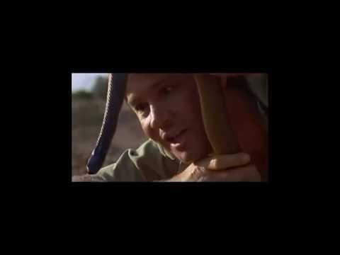 Steve Irwin The Crocodile Hunter's Greatest Moments