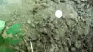 Diggin History #16 - Metal Detecting Old Paths In The Woods.