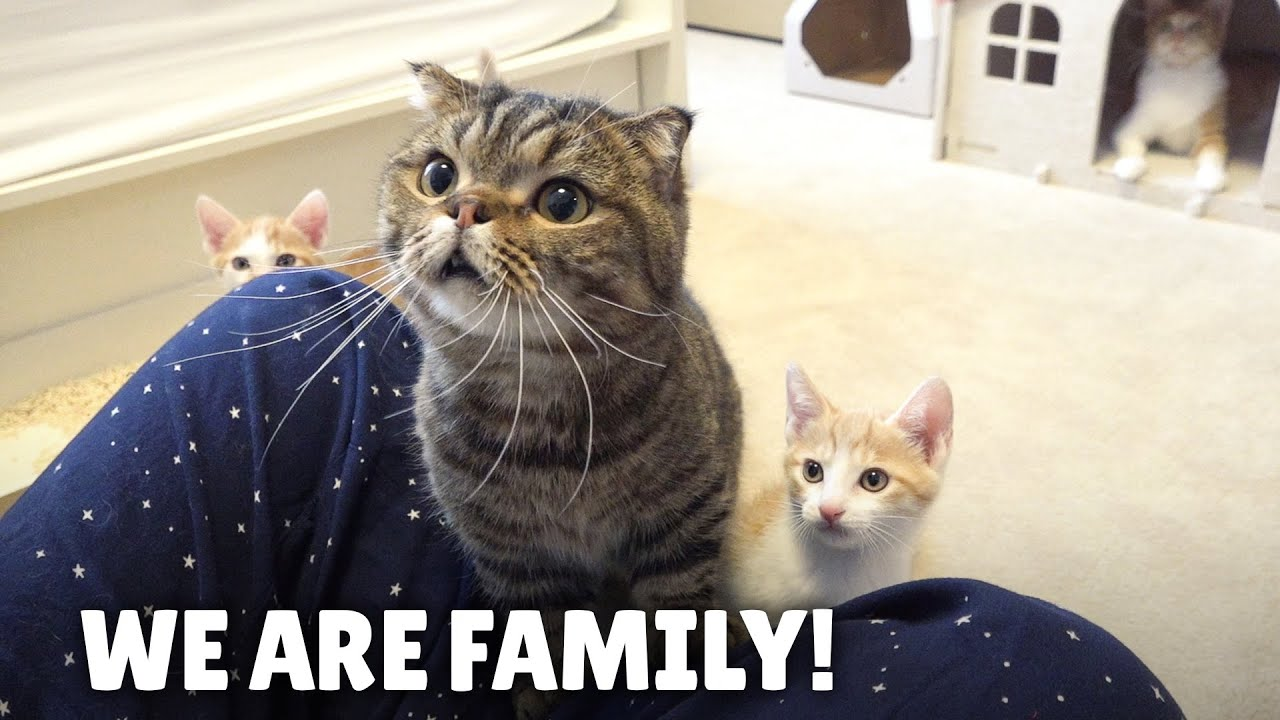 Giving the New Cat Family a Home! | Kittisaurus