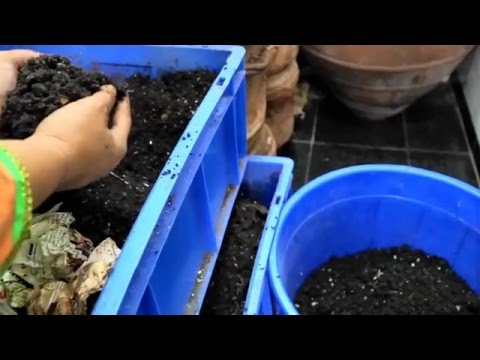 EASIEST Method of separating worms from  vermicompost | Horizontal Migration Method