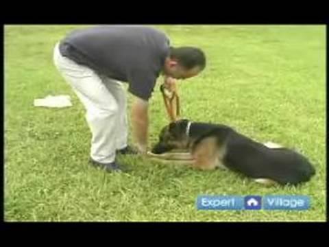 Dog Training Hand Signals Youtube