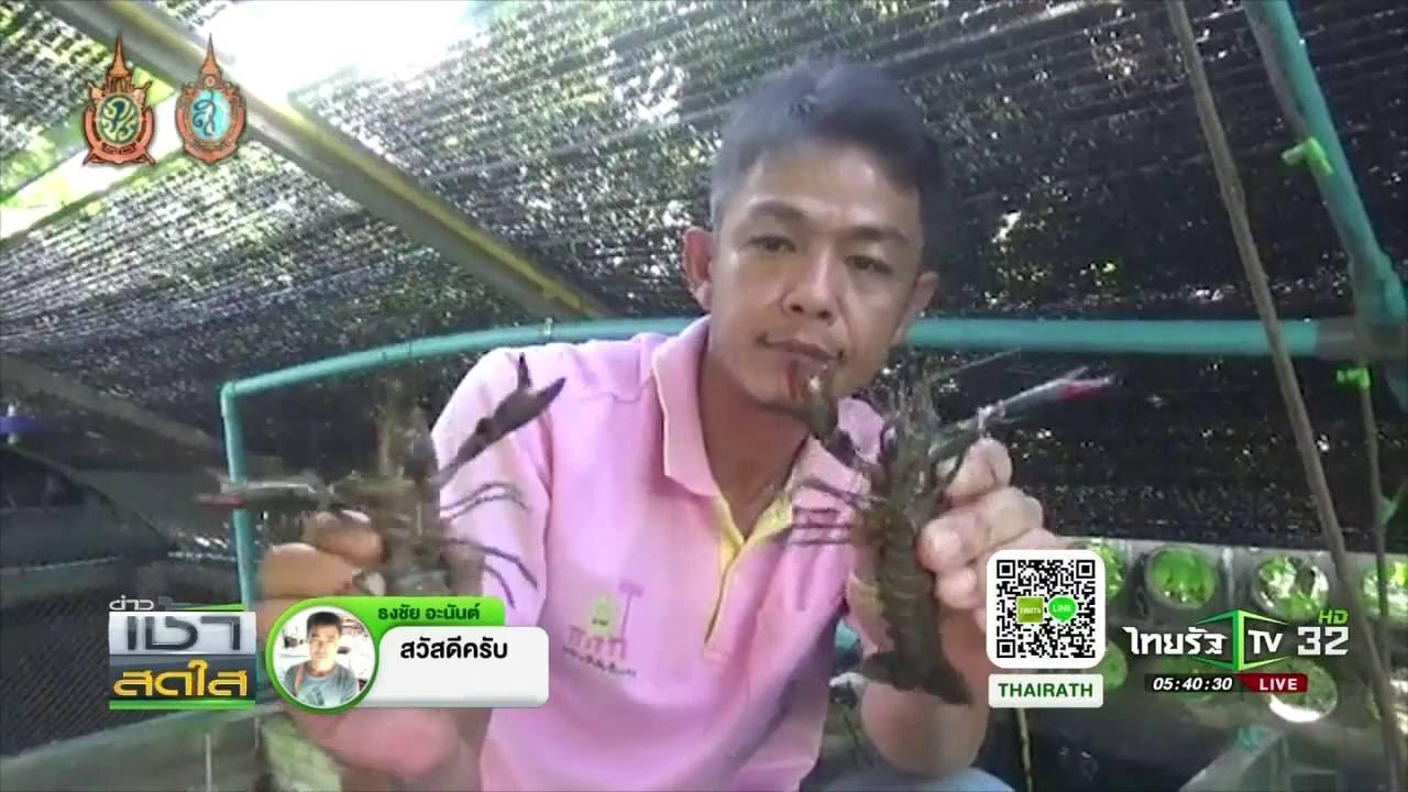 เชียงใหม่ หนุ่มเลี้ยงกุ้งก้ามแดง | 01-09-59 | เช้าข่าวชัดโซเชียล | ThairathTV
