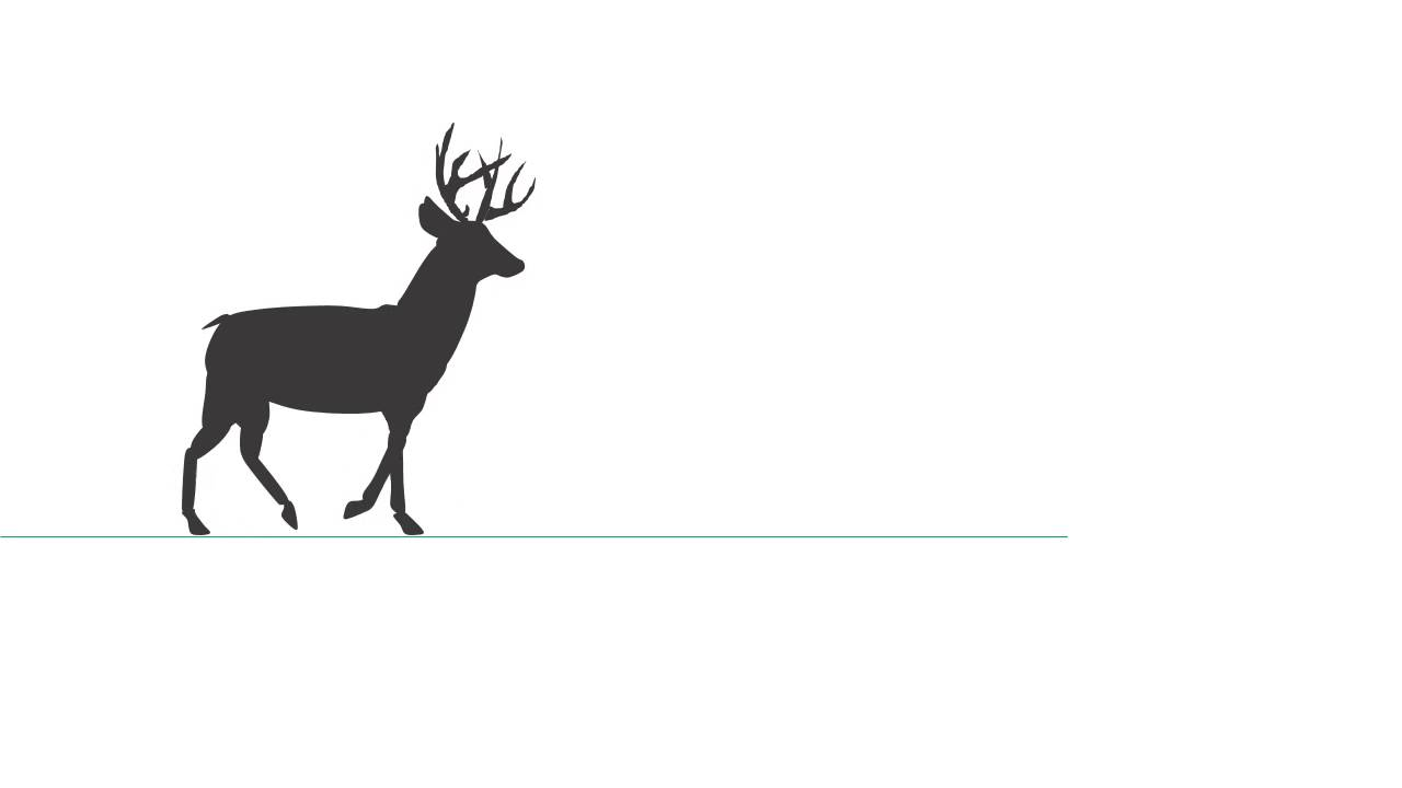 Deer Walking Key Frames - Power Point Animation - YouTube