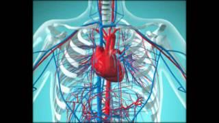 Причины появления, симптомы и лечение острой коронарной недостаточности