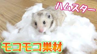 ぷんちゃんモコモコ好きみたいです ⭐きょんくまのメインチャンネル↓↓↓ h...
