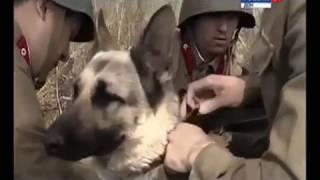 Фильм про Ростовскую школу служебно-розыскного собаководства.