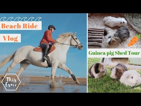 Beach horse ride and Guinea pig shed Tour / Clean up!   This Esme