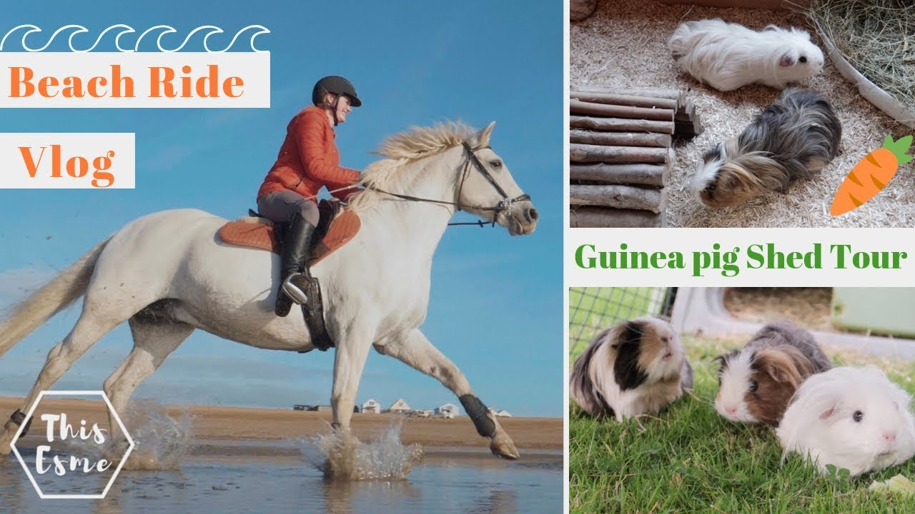 beach-horse-ride-and-guinea-pig-shed-tour-clean-up-this-esme