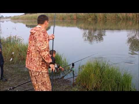 Виды обитающих рыб