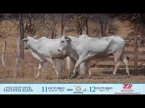 LOTE 182