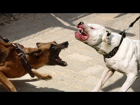 TOP 10 DOG BREEDS WITH LOUDEST BARK