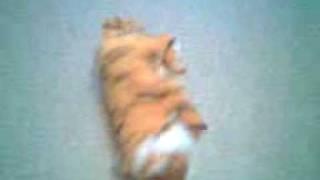 Игрушка тигрёнок.3gp(, 2009-12-31T09:57:54.000Z)