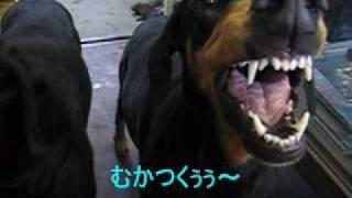 サスペンス劇場 ドーベルマンズ編 thumbnail