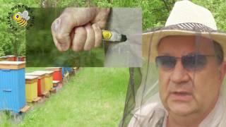Użądlenia pszczół. Zapobieganie. Wstrząs anafilaktyczny. Adrenalina.