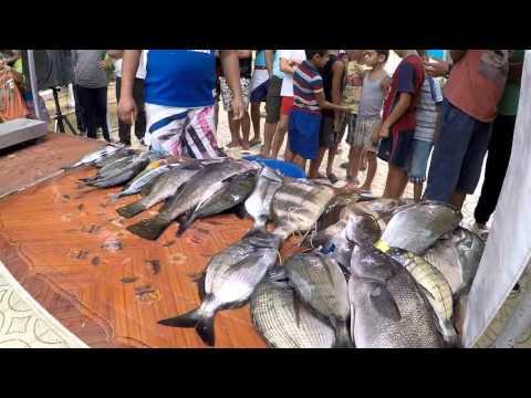 chasse sou marine algerie 2015   achab sidahmed cr du regional tipaza
