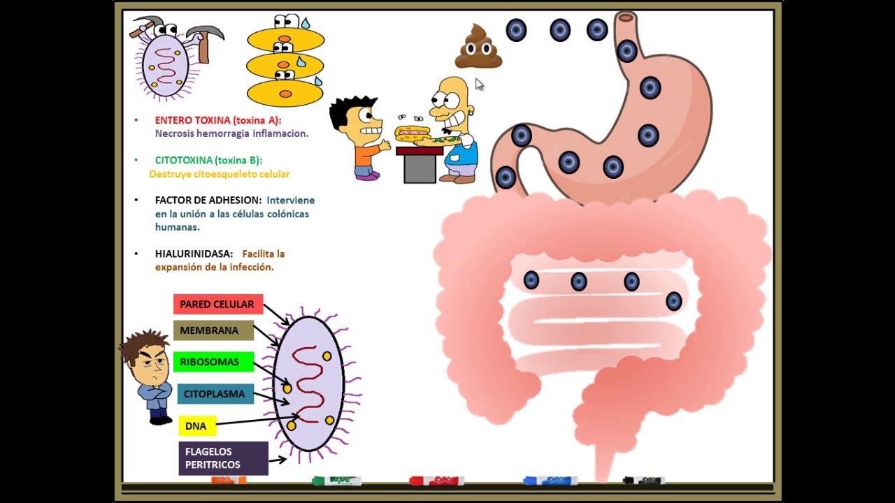 toxina clostridium