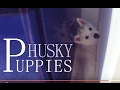 watch he video of Mishka is visiting her posh sister and her puppies ✓     Off Topic