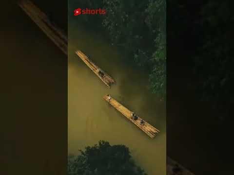 Rafting Bambu Sungai Di Kalimantan #Shorts