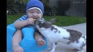 Uyanık tavşan çok sevimli komik video