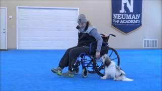 Humphrey (Lowchen) Boot Camp Dog Training Video