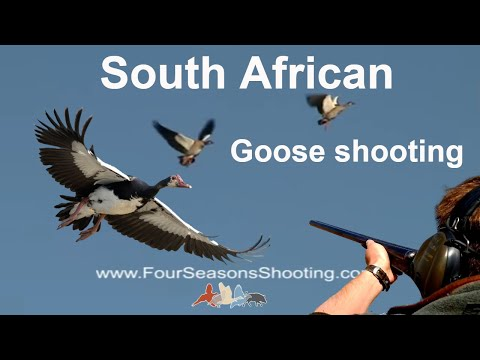 African Goose Shooting, South Africa Goose Hunting season March to August 2018