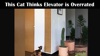 Cat Climbs Smoothly - Just For Laughs Funny Animal Videos