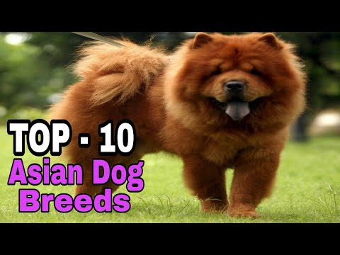 TOP-10  Asian Dog Breed / That Are Very Cute/ Aryan Dog Club  Aryandogclub