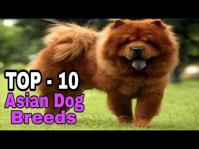 TOP-10  Asian Dog Breed / That Are Very Cute/ Aryan Dog Club  Aryandogclub